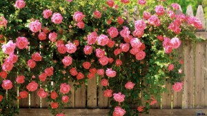 locksmiths brighton rose bushes